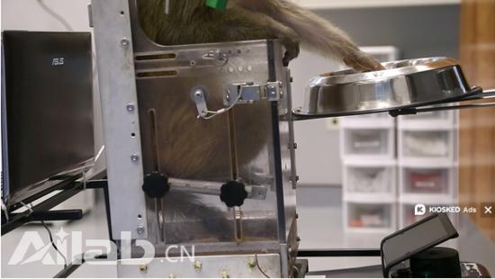 新型无线脑机接口:猴子可用思想控制轮椅